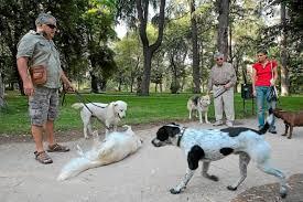 imagenes de animales y cosas la lucha para que los animales dejen de ser considerados cosas en