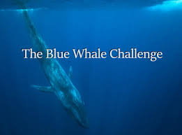 Whaling Meme - blue whale challenge blue whale game 5 facts about the deadly