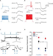 chandelier cells frontiers depolarizing effect of neocortical chandelier neurons