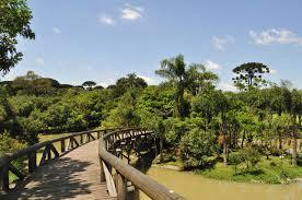 native plants in brazil curitiba brazil
