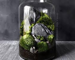 terrarium etsy