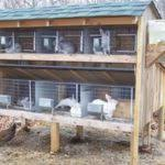Rabbit Hutch From Pallets Outdoor Ideas Ideas With Pallets