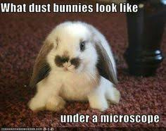 Cute Baby Animal Memes - pin by mickey fantastic on fuzz fluff feathers pinterest