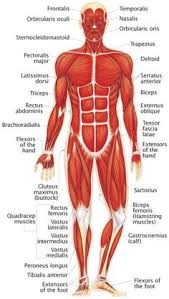 Anatomy Of Human Body Organs Posture Quiz Time What Are The