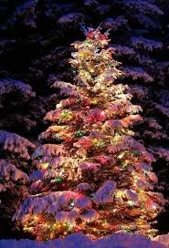 outdoor lighted trees home design and decorating