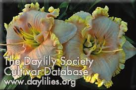 ahs daylily cultivar front porch swing