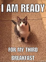 Feed Me Meme - hungry cat feed me meow melody the cat cats pinterest cat