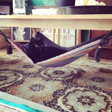 how to make a kitty hammock cat hammock how to make a pet bed