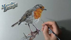 how to draw a robin bird youtube