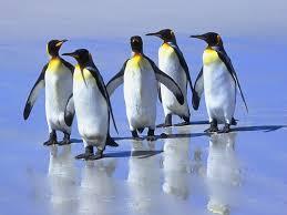 Falklands mark II Images?q=tbn:ANd9GcTUBlqCnEp1wnmPK6osfikvzxPPtVCveP2mxQU_hNItGUC-K2Zn