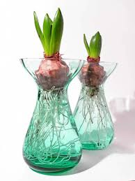 forcing beautiful bulbs for your indoor garden
