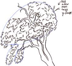how to draw trees and oak trees with simple steps tutorial how