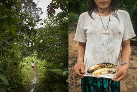 amazon rainforest native plants we are what we eat foraging in the amazon rainforest u2013 proof