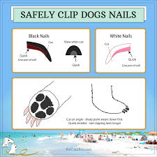 how to safely clip dogs nails and stay friends with fido petclubpro