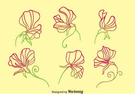 sweet pea flowers sweet pea flowers collection vector free vector