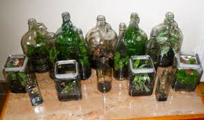 making a terrarium out of recycled bottles