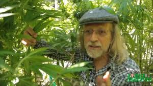 greenhouse construction tips by jorge cervantes u2013 bud rot