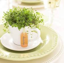 tea cup favors potted plant in teacup centerpieces and favors budget brides