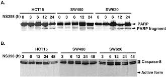 induction of apoptosis in colon cancer cells by cyclooxygenase 2
