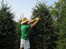 7 best christmas tree farm animals images on pinterest christmas