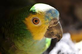 amazon black friday bird cages everyday parrots u0026 pet birds lafeber co
