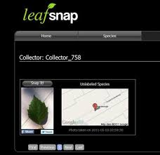 leafsnap is a new app to identify trees treehugger