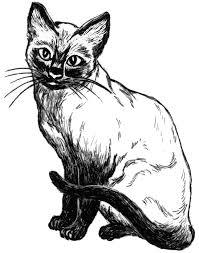 cat siamese sketch animals cats cat 4 cat siamese sketch png html