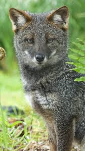 375 best outdoors images on pinterest wild animals nature and
