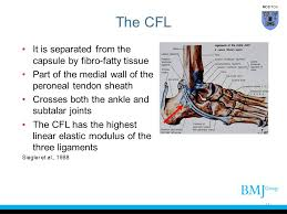 Lateral Collateral Ligament Ankle Cover Slide Ppt Video Online Download