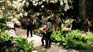 Ny Botanical Garden Membership Experience The Magic Of Orchid Evenings At The New York Botanical