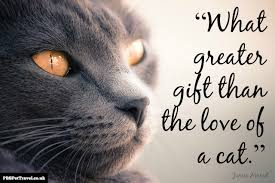 Beautiful Quotes On Love by Beautiful Quotes About Cats 37 For Your Quotes About Love With