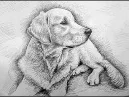 how to draw a dog golden retriever youtube