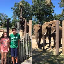 evan and lauren u0027s cool blog 8 19 16 roger williams zoo and