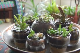 indoor succulent garden care gardening ideas