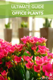Best Indoor Plants Low Light by 7 Best Plants For High Light Indoor Areas Images On Pinterest