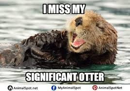 Otter Memes - sea otter meme png