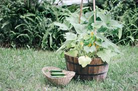 how to grow zucchini vertically ehow