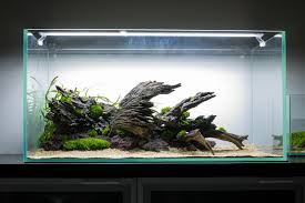 3239 best weather images on pinterest aquascaping planted