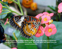 butterfly quotes quotes about butterflies