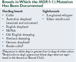 mdr1 australian shepherd vetfolio
