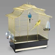 uccelli in gabbia pulizia gabbia uccelli lavare uccelli