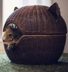 cute basket buddies wallpapers 1232 best kittens images on pinterest cats kitty cats and sad kitty