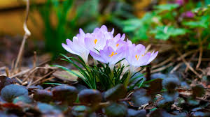 beautiful spring flowers background pictures to pin on pinterest