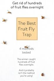 What Are The Small Flies In My Bathroom Best 25 Homemade Fly Traps Ideas On Pinterest Bug Trap Green