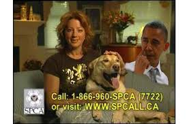 Aspca Meme - obama aspca commercial aspca commercial parodies know your meme