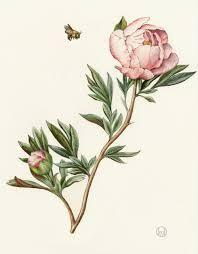 Japanese Flower Artwork - 15 best japanese flower artwork images on pinterest flower
