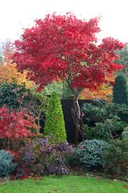 736 best trees for landscaping images on pinterest plants