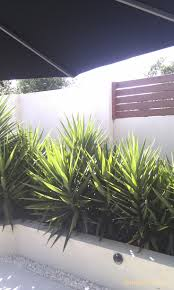Tropical Plants Gardens Yukkas Are Hardy Plants And Perfect For The Front Courtyard Best