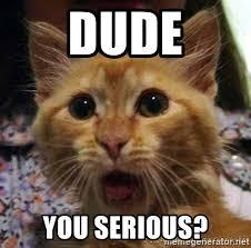 Grumpy Cat Meme Generator - grumpy cat meme generator the best cat 2018