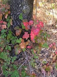 poison oak marque urgent care
